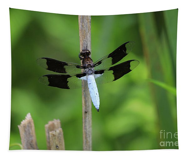Common Whitetail Or Long-tailed Skimmer Tapestry