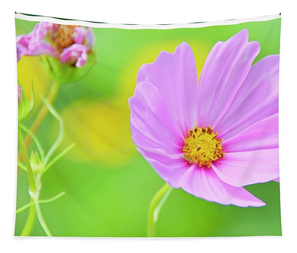 Cosmos Flower In Full Bloom, Bud Tapestry