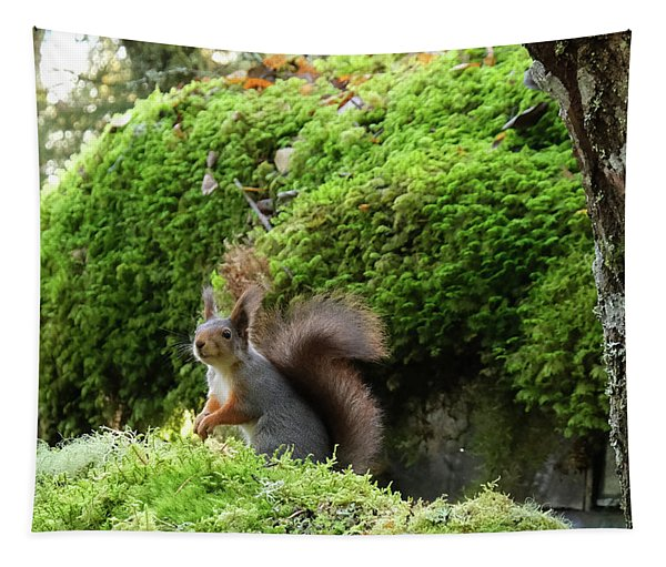 Curious Squirrel Tapestry