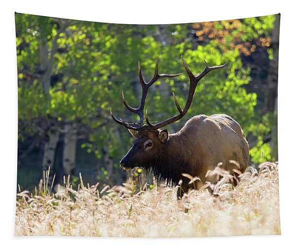 Fall Color Rocky Mountain Bull Elk Tapestry