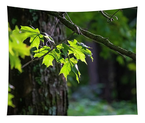Fall Green Tapestry