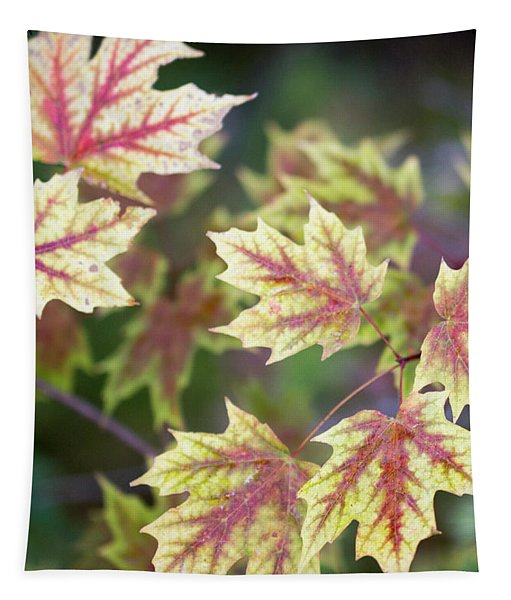 Fall Red And Yellow Leaves 10081501 Tapestry