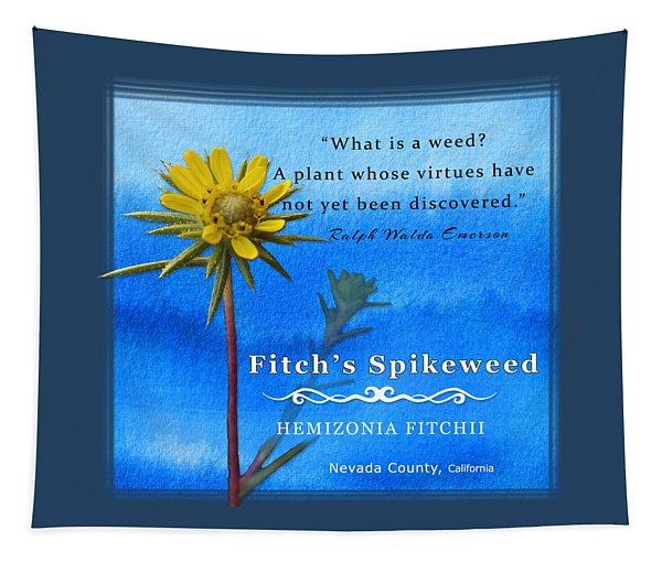 Fitch's Spikeweed Tapestry