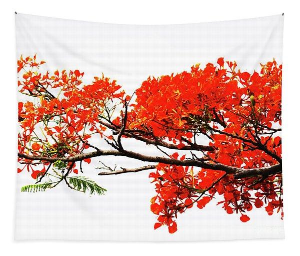 Flamboyant Tapestry