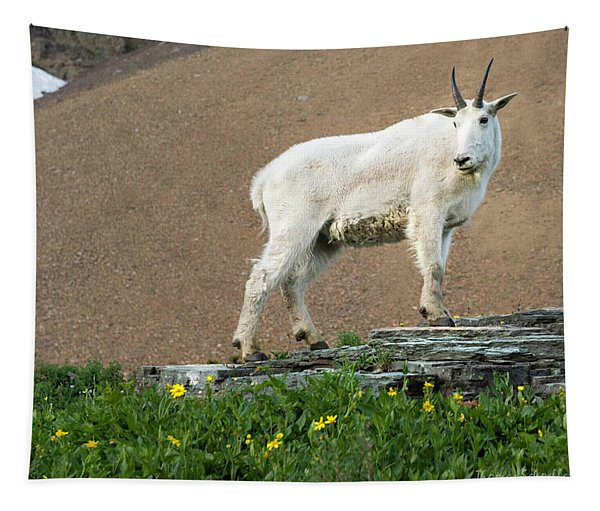 Goat Haunt Logans Pass Tapestry