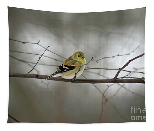 Goldfinch In Winter Looking At You Tapestry