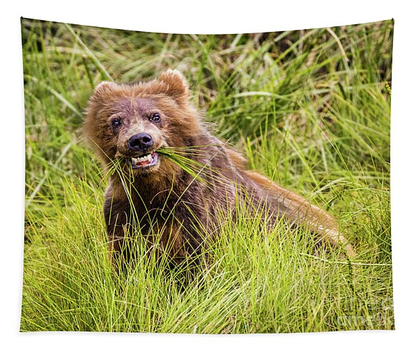 Grizzly Cub Grazing, Alaska Tapestry