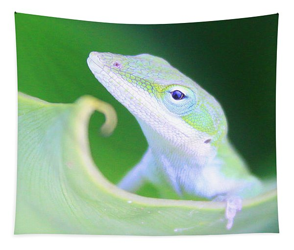 Hello, Anole. 2 Tapestry