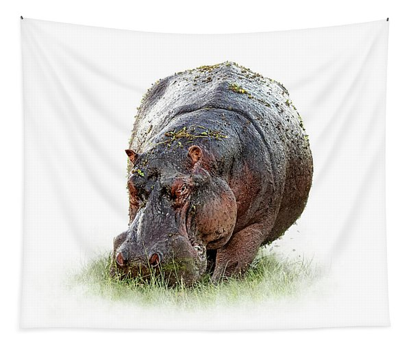 Hungry Hippo Isolated On White Tapestry