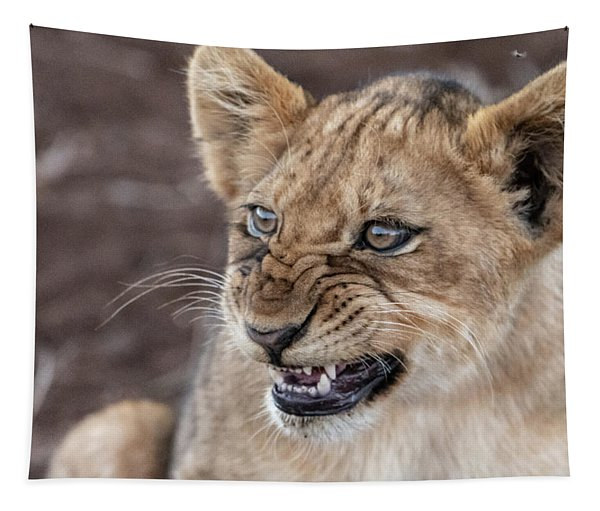 Irritated Lion Cub Tapestry