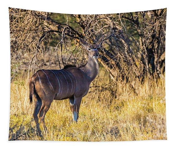 Kudu, Namibia Tapestry