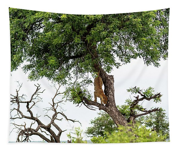 Leopard Descending A Tree Tapestry