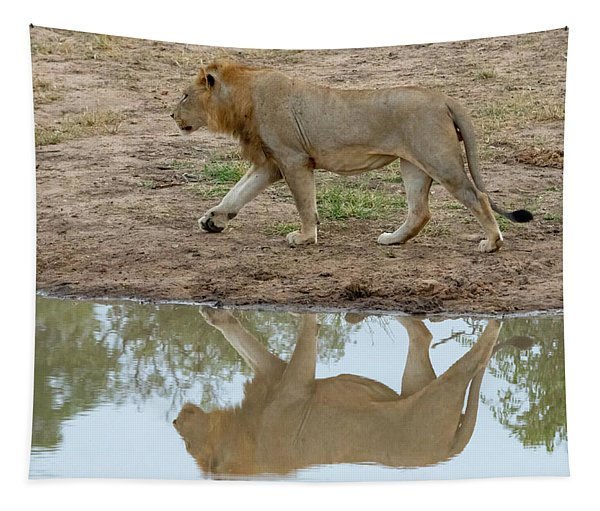 Male Lion And His Reflection Tapestry