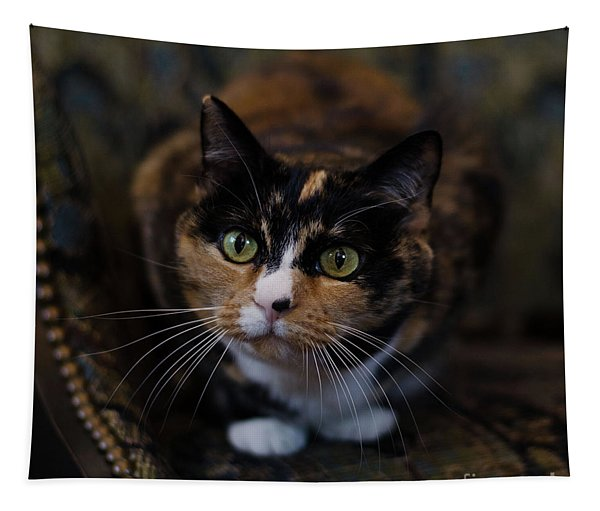Mischa Tapestry
