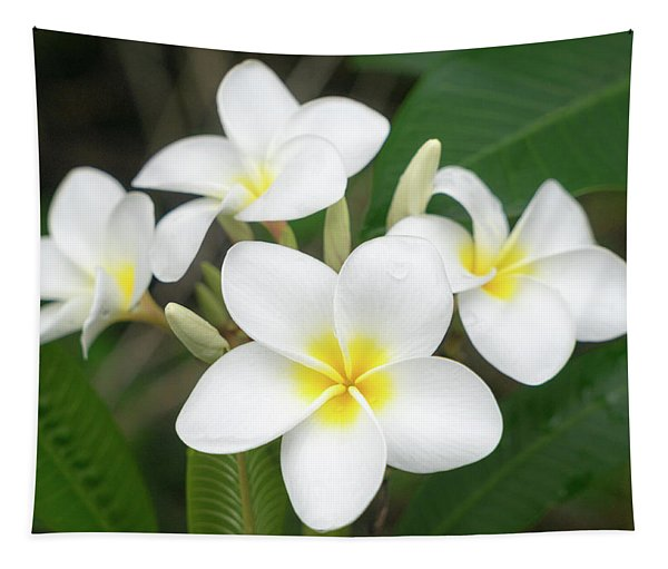 Pleasing Plumeria Tapestry