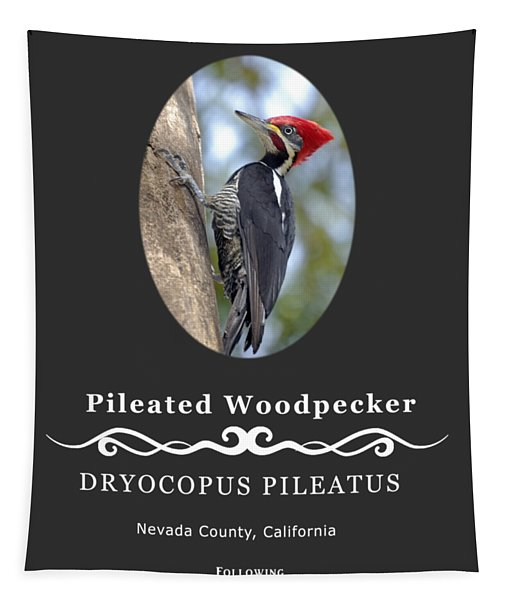 Pleated Woodpecker Tapestry