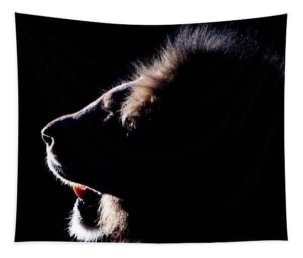 Portrait Of A Backlit Male African Lion Tapestry