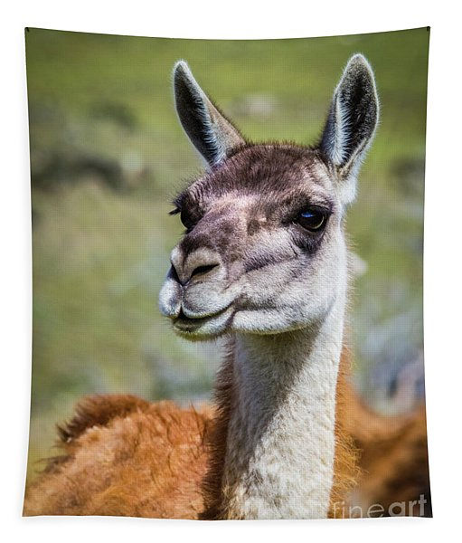 Portrait Of A Guanaco, Patagonia Tapestry