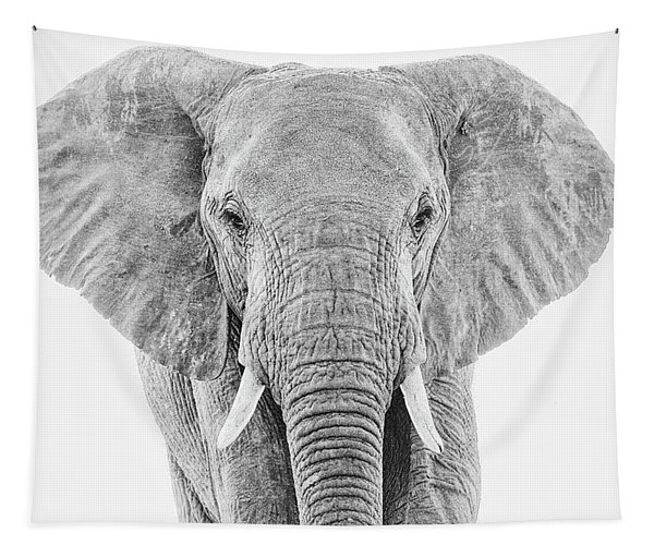 Portrait Of An African Elephant Bull In Monochrome Tapestry