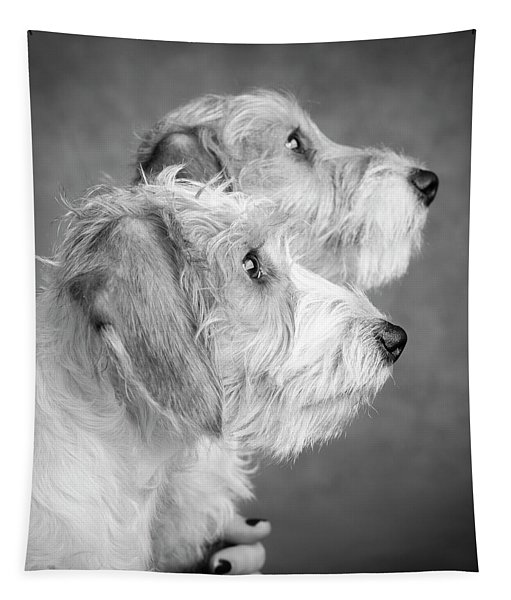 Portrait Of Wire Hair Mini Dachsund Dogs Tapestry