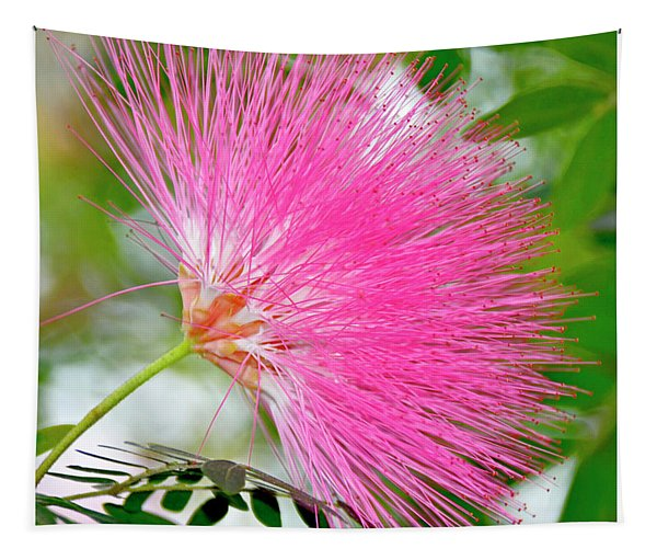 Powderpuff Flower Tapestry
