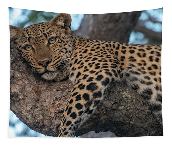 Relaxed Leopard Tapestry