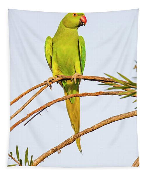 Rose Ringed Parakeet Psittacula Krameri Tapestry