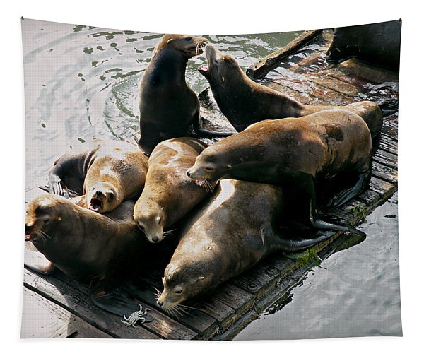 Sea Lions In Newport Tapestry
