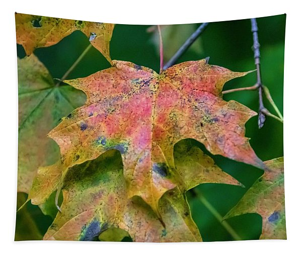 Seasonal Layering Tapestry