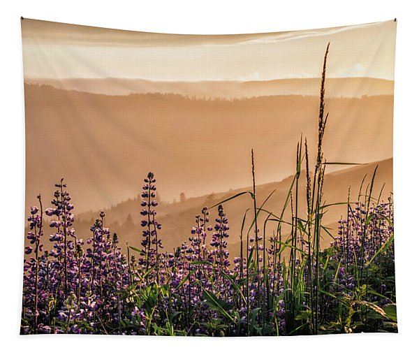 Sunset Among The Lupine Tapestry