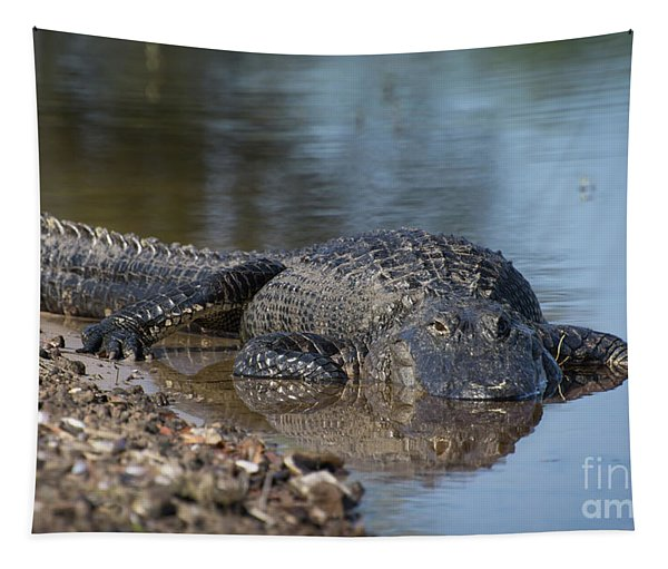 Too Full. American Alligator Tapestry