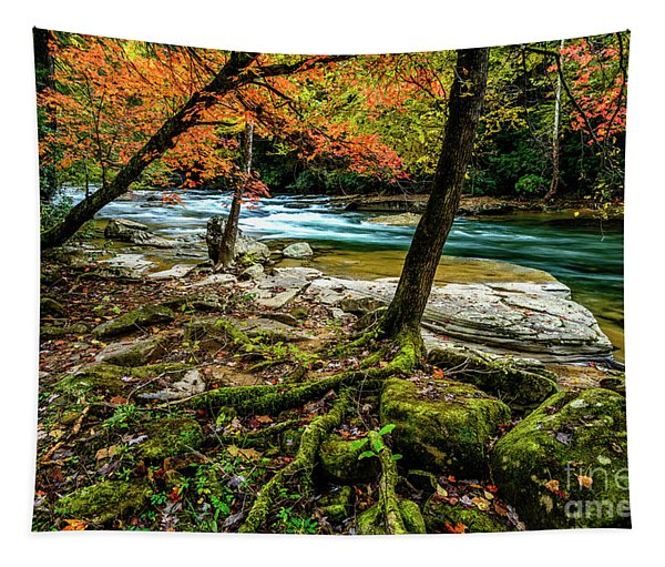 Tree Roots By River Tapestry