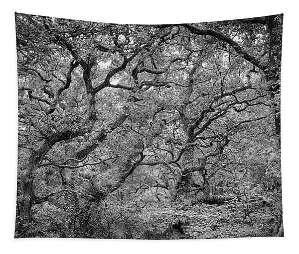 Twisted Forest Tapestry