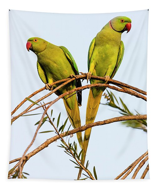 Two Rose Ringed Parakeets Psittacula Tapestry