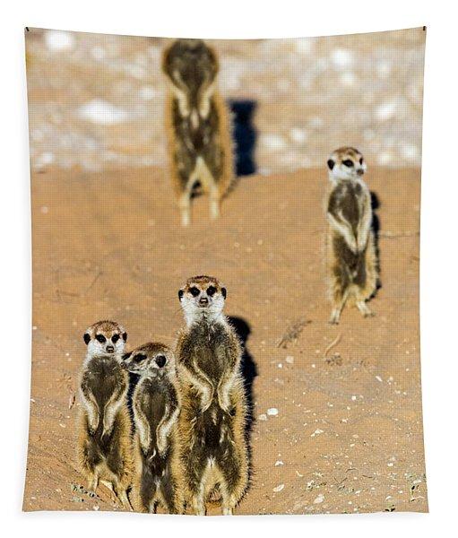 View Of Standing Meerkats Suricata Tapestry
