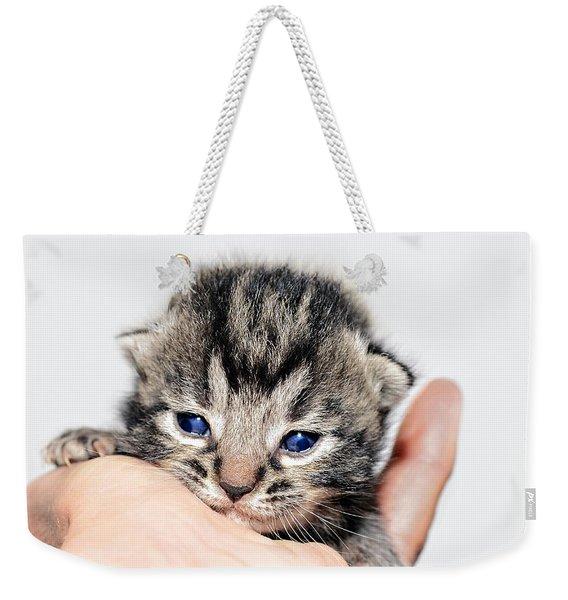 Kitten In A Hand Weekender Tote Bag