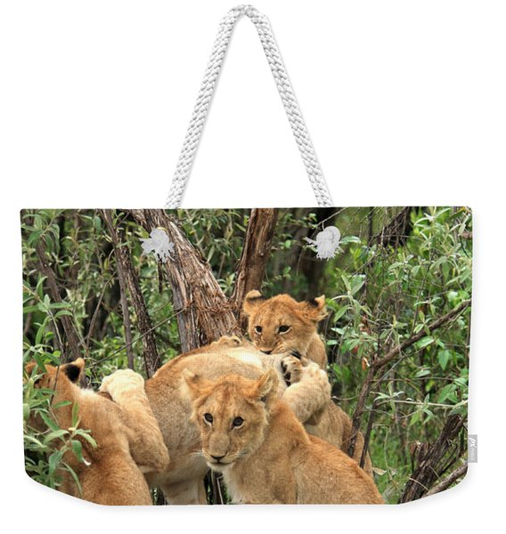 Masai Mara Lion Cubs Weekender Tote Bag