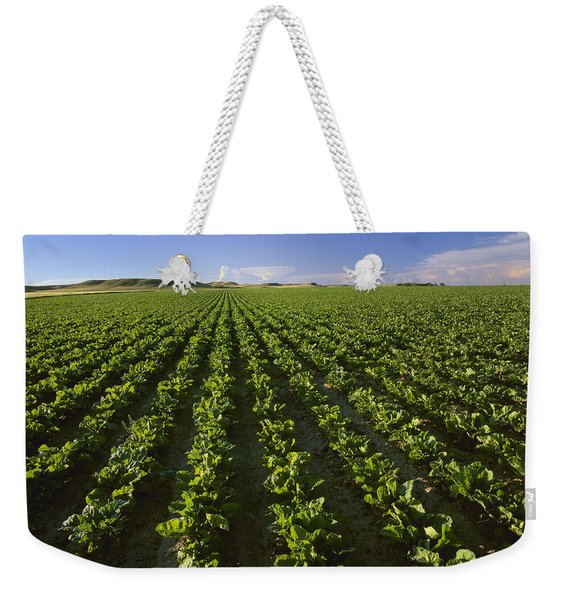 Agriculture - Field Of Maturing Sugar Weekender Tote Bag