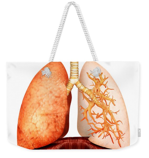 Anatomy Of Human Respiratory System Weekender Tote Bag