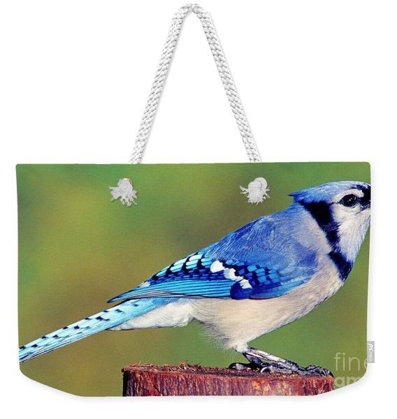 Blue Jay Cyanocitta Cristata Weekender Tote Bag