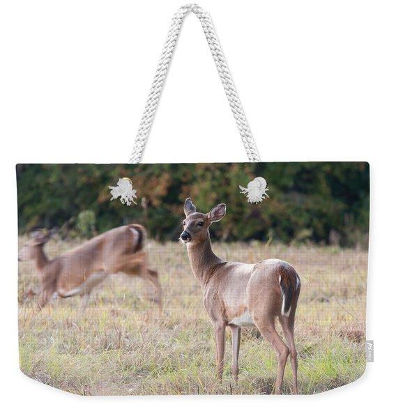 Deer At Paynes Prairie Weekender Tote Bag
