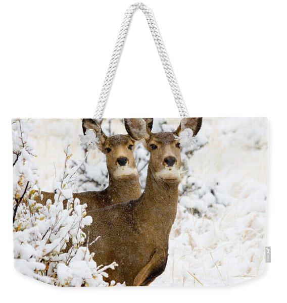 Doe Mule Deer In Snow Weekender Tote Bag
