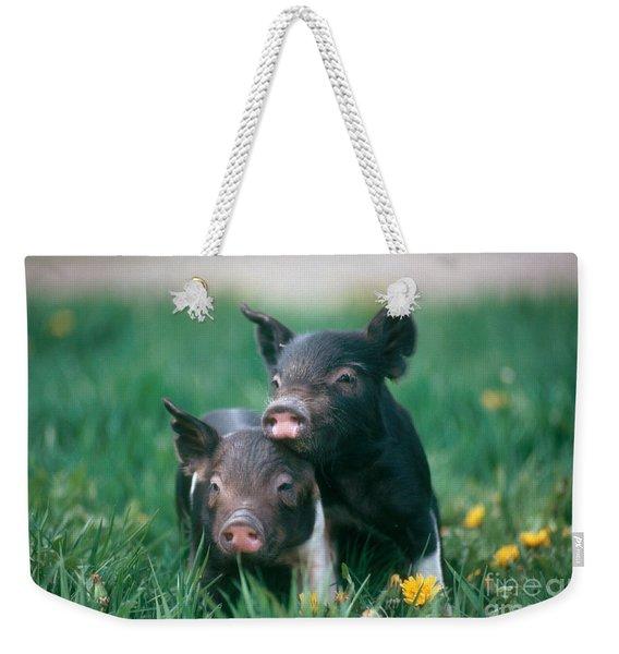 Domestic Piglets Weekender Tote Bag