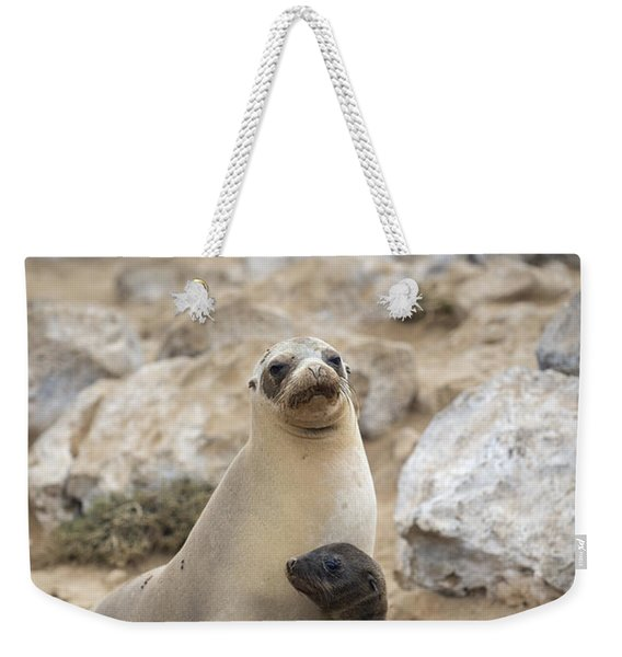 Galapagos Sea Lion And Pup Champion Weekender Tote Bag