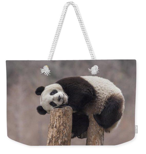 Giant Panda Cub Wolong National Nature Weekender Tote Bag