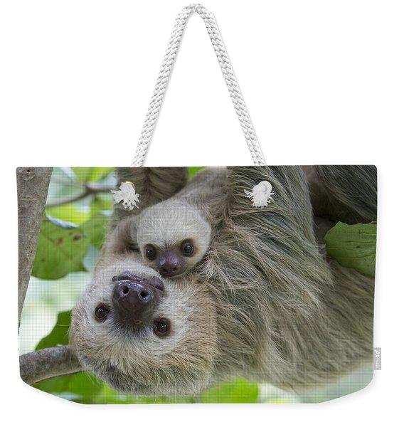 Hoffmanns Two-toed Sloth And Old Baby Weekender Tote Bag