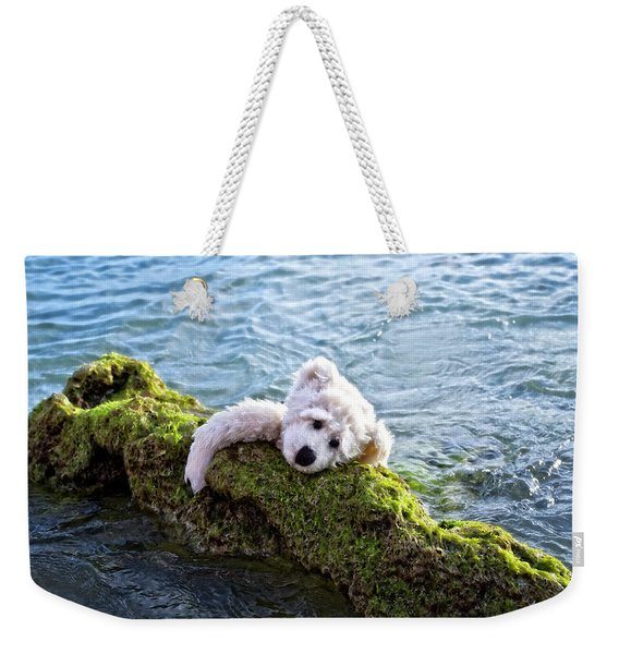 Just Hang On - Teddy Bear Art By William Patrick And Sharon Cummings Weekender Tote Bag
