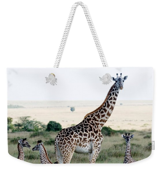 Masai Giraffes Giraffa Camelopardalis Weekender Tote Bag