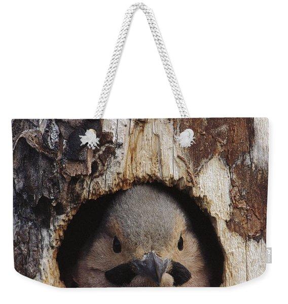 Northern Flicker  In Nest Cavity  Alaska Weekender Tote Bag