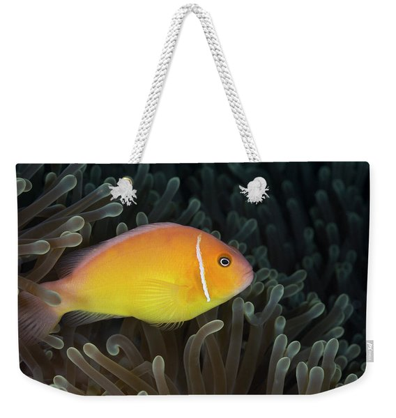 Pink Anemonefish Amphiprion Perideraion Weekender Tote Bag